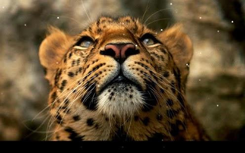 豹動態桌布 個人化 App-愛順發玩APP