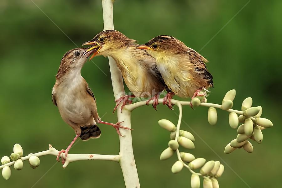 Feeding by Husada Loy - Animals Birds