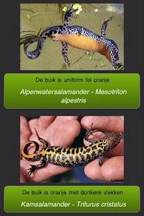 Reptielen en Amfibieën- screenshot thumbnail