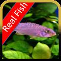 Fish Real Live Free logo