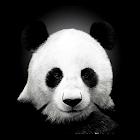 赤ちゃんパンダライブ壁紙 icon