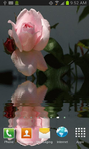 BEAUTIFUL PINK ROSE LWP