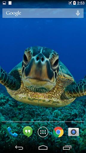 Sea Turtle Live Wallpaper FREE