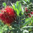 Kamehameha Schools Kapalama Campus Biodiversity Challenge
