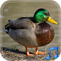 Duck Dynasty Ringtones FREE icon