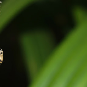 what is it? by aRie Fitri - Nature Up Close Hives & Nests