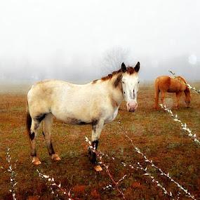 Horses On A Foggy Winter's Day by Regina Watkins - Animals Horses (  )