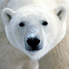 Save the Arctic!! LWP FREE icon