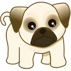 Little Dog HD Wallpaper icon