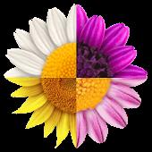 Step Flowers Pro