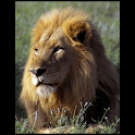 Animals : Lion logo
