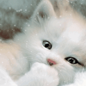 Sweet Baby Cat Live Wallpaper icon