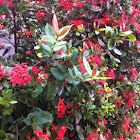 Red flowering bush