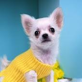 cute dog A1