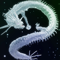 Dragon White icon