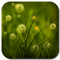 Colorful Summer Meadow Free icon