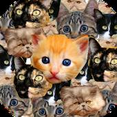 Kitten Faces Free