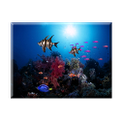 Sun aquarium live wall paper icon