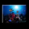 Sun aquarium live wall paper icon
