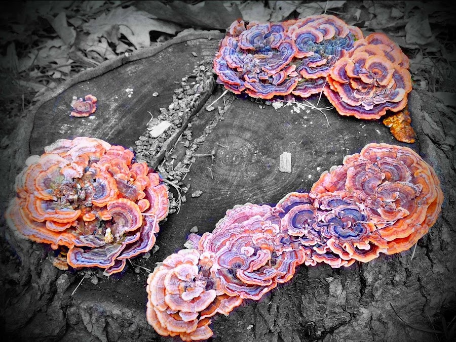 Splash of Fungus by Cecilia Sterling - Nature Up Close Mushrooms & Fungi (  )