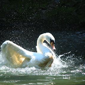 by Forika Helga - Animals Birds