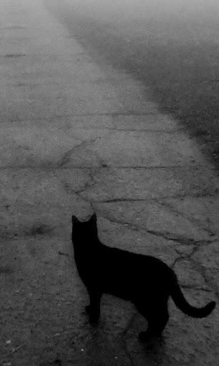 黒猫の壁紙