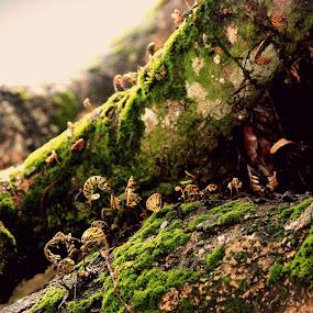 Growth by Mitrava Banerjee - Nature Up Close Mushrooms & Fungi