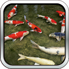 Koi Fish HD 3D Wallpaper icon