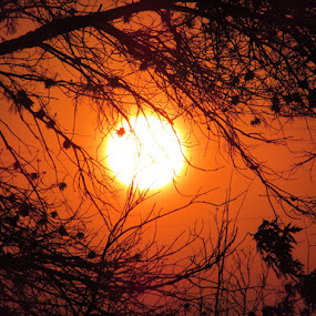 Light Behind The Trees by Kyla Youmans - Nature Up Close Trees & Bushes ( orange, colors, beautiful, shining, yellow, pretty, photography, sun, center, sky, nature, gorgeous, sunset, outdoors, opening, mixed, trees, nature up close, summer, view, blended, evening, black )