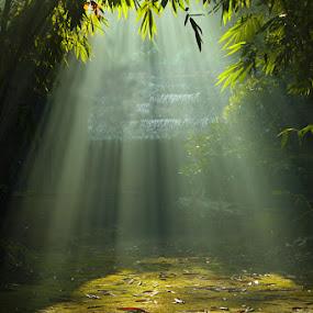 Rol by Ramadhan Bagaskara Arya Parmuka - Nature Up Close Other Natural Objects ( kamrol )