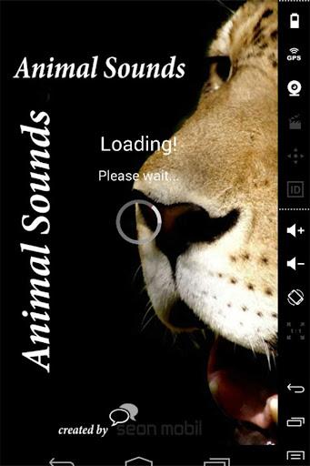 Animal Sounds - Hayvan Sesleri