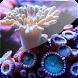 3D Coral IV (PRO)