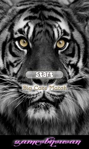 Big Cats Match