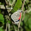 88 Butterfly