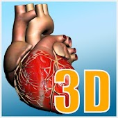 Explore heart in 3D