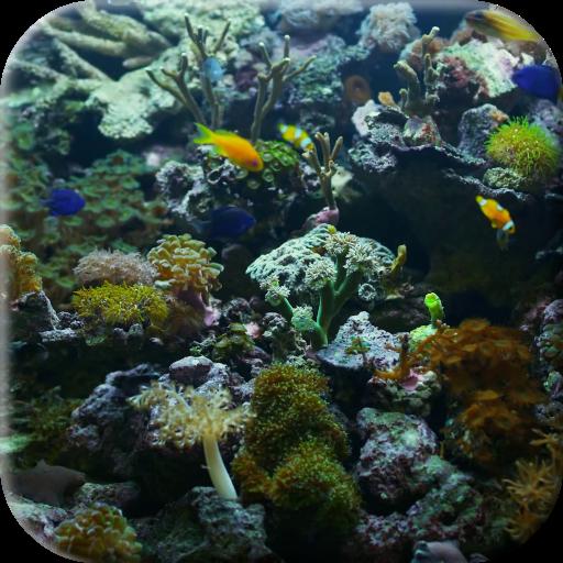 Aquarium Video Live Wallpaper 個人化 App LOGO-硬是要APP