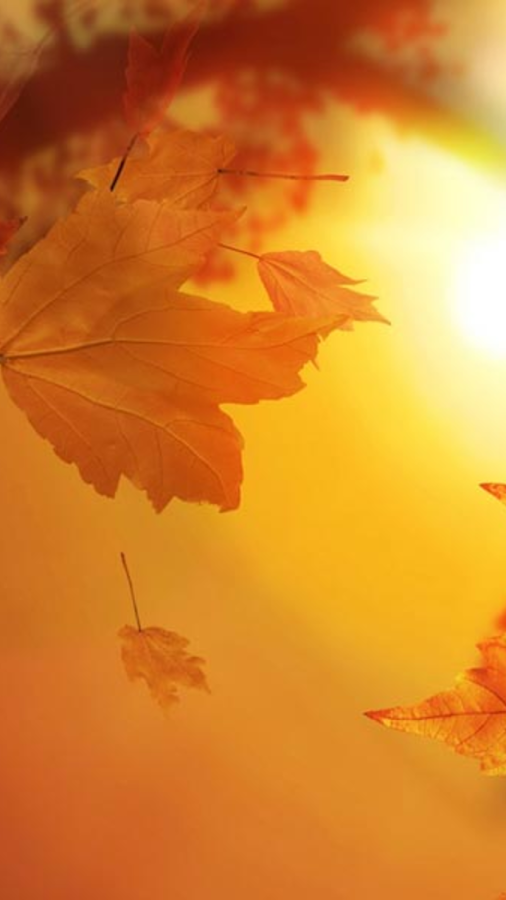 autumn wallpapers for chat android apps on google play