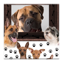 Dog Frames icon