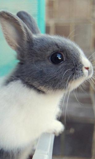玩個人化App|毛茸茸的小兔子壁紙免費|APP試玩