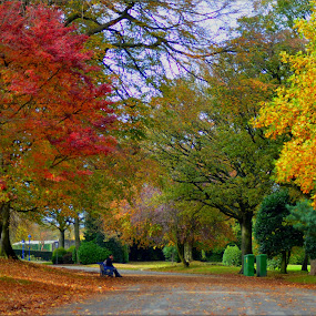 Autumn time in Lister park by Nic Scott - City,  Street & Park  City Parks ( nature, autumn leaves, autumn, trees, autumn colors, leaves, , relax, tranquil, relaxing, tranquility )