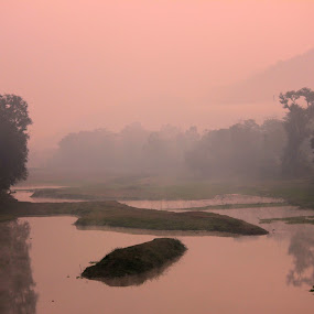 Sky is pink and so are the trees by Mitrava Banerjee - Landscapes Forests