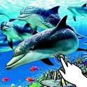 Magic touch:Beautiful dolphins icon