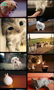 Mini Pets|玩個人化App免費|玩APPs