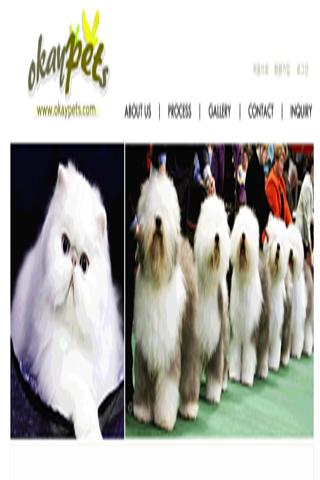 오케이펫츠 okaypets 이색 애완동물수입서비스