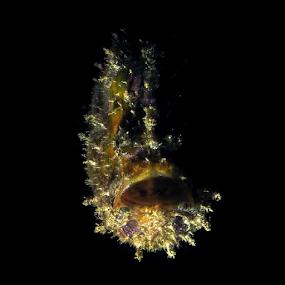 by Asep Dedo - Animals Sea Creatures