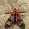 Teuthras Moth