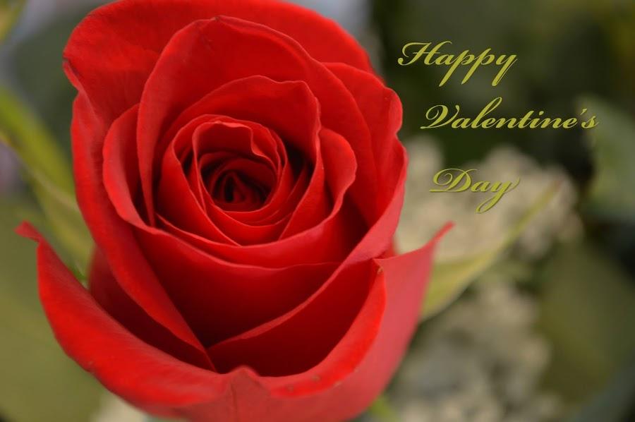 Happy Valentine's Day by Shannon Maltbie-Davis - Typography Captioned Photos ( valentine's day, love, postcard,  )