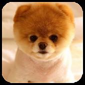 Japanese Akita Dog LWP FREE