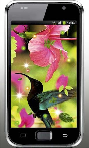 Cute Colibri HD live wallpaper