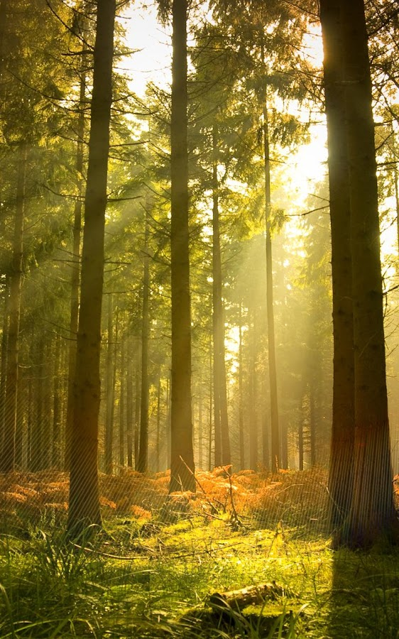 Sunny Forest Live Wallpaper- screenshot